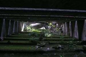 Jardin de l'ombre