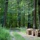 2003 Forêt de Bercé